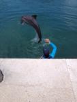 dolphin cc2 blog